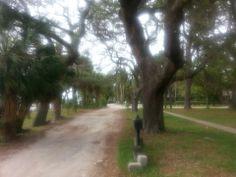 One of my most scenic roads in the world Victoria Drive, Dunedin, FL Dunedin Florida, 6 Photos, Dog Friends, Roads, Palm, Victoria, Spaces, Adventure, Sunset