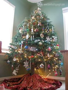 Christmas traditions Black Hill Spruce Christmas Tree