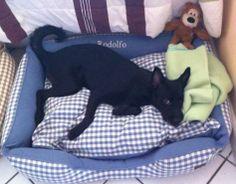 Rodolfo aproveitando sua nova Cama personalizada MILLIE Para dormir: www.millie.com.br