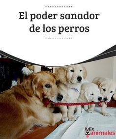 El poder sanador de los perros  Los perros a veces actúan como nuestros héroes, a continuación les hablamos un poco sobre el poder sanador de los perros. #poder #perro #sanador #curiosidades