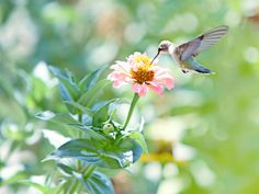 Humming bird by AnhBang TonThat on 500px
