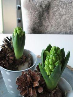 no Hulda Inneplanter Indoor Plants, Succulents, Inside Plants, Succulent Plants