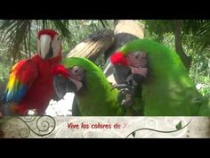 Xcaret I What's new/ Nuevas actividades - YouTube