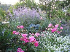 delphinium, allysum, phlox, Russian sage, catmint; roses: John Davis, the Fairy, Carefree Wonder