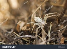 Find Small Spider Hiding Grass Camouflaged Spider stock images in HD and millions of other royalty-free stock photos, illustrations and vectors in the Shutterstock collection. Thousands of new, high-quality pictures added every day. Shallow Depth Of Field, Camouflage, Spider, Grass, Insects, Photo Editing, Royalty Free Stock Photos, Illustration, Pictures