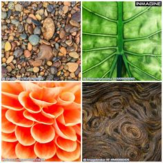 Get up close and personal with nature! View more here http://bit.ly/103HpHW #nature #texture #closeup