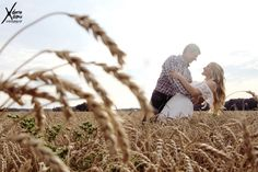 kissing in the wheat field for engagement pictures