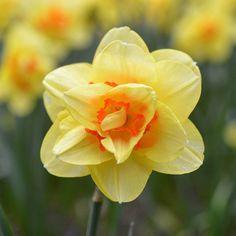 Нарцисс #NaturesMoments_4ever #flowersandmacro #lovelynatureshots #izt_flower #quatroestacoes  #9vaga_flowersart9 #bptalsmember #photografia_naturamember #russia_fotolovers #ig_nature_hub #9flower9  #9Vaga_Dailytheme9  #igscflowers  #photografia_natura #symply_flowers #estaes_flor  #captures_flowers  #9vaga_naturemiracles9 #eyecatching_pics #rs_flowers #9vaga_fl_yellow9 by annuschka10
