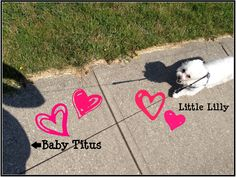 A Walk With My Babies!!!