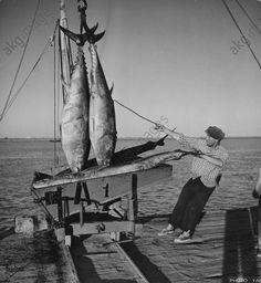 Pêche / Pêche au thon. Tavira (Algarve): déchargement du thon.