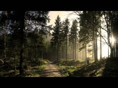 sunny forest road wallpaper for desktop and mobile phones. Forest Road, Pine Forest, Black Forest, Conifer Forest, Ipad Air Wallpaper, Wood Wallpaper, 1080p Wallpaper, Forest Wallpaper, Nature Wallpaper