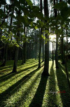 Hutan dago pakar