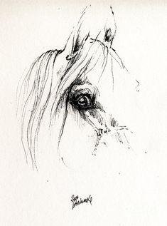 The Horse Eye 2014 05 16 Drawing