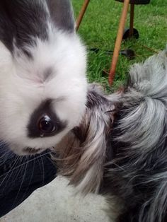 Mutual understanding- I'll let you sniff me just as long as you don't eat me :)