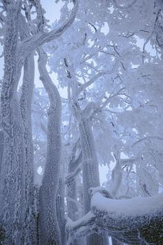 In the quietness of the grander of winter Season , we can see God's presence all around us