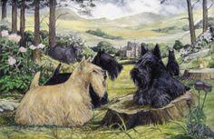"SCOTTISH TERRIER SCOTTIE DOG ART LIMITED EDITION PRINT - ""near Glahms Castle"" | eBay"