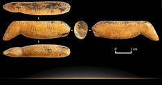 Another sensational first for the Denisovans, supporting their advanced nature. From the Siberian Times of November 2019 comes news that archaeologists working within the Denisovan. Eurasian Steppe, North Asia, Altai Mountains, Blue Green Eyes, Archaeology News, Ancient Mysteries, Human Behavior, Effigy, Science And Nature