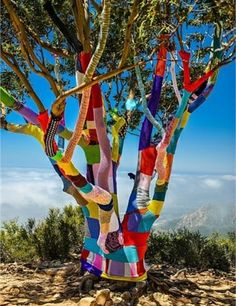 I wish someone would yarn bomb my trees.  So pretty :) Yet, I am not that crafty.