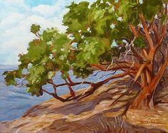 madrona tree | Madrona Tree Diane Dudek