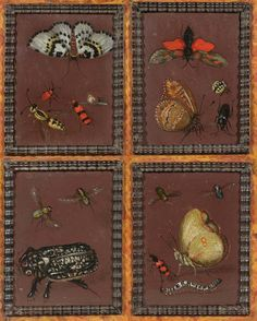 Attributed to HECKEN, MAGDALENA VAN DEN (active circa 1635) Four panels with butterflies and insects. Oil on panel. Each 7.6 x 6.3 cm.