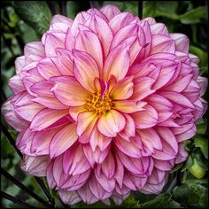 Dahlia Fields Canby Oregon In | Leave a Reply Cancel reply
