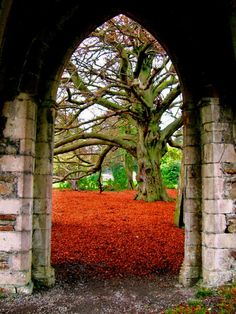 This is an arch in Margam Wales but I can't help be reminded of the old gods in game of thrones