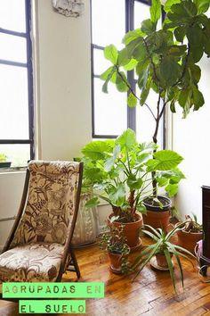 Decorar con plantas en macetas de barro. http://enestadoderachel.blogspot.com.es/2015/02/plantas-y-macetas-de-barro.html