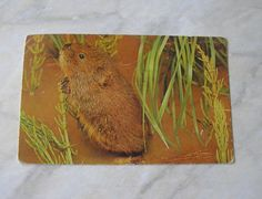 Vintage used English postcard Water Vole Manchester 1987 real photo postcard river landscape England stamp 13p SKU E by IrishBarnVintage on Etsy
