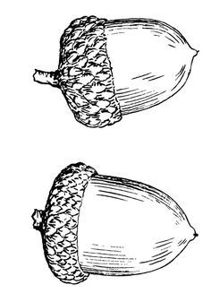 acorn thimble tattoo - Google Search
