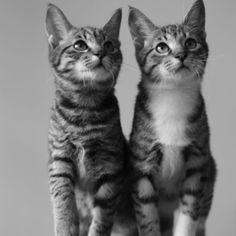 tabby siblings sitting side-by-side