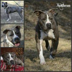 Dog Adoption Sioux Falls Sd