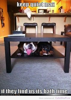 dogs hide from mom