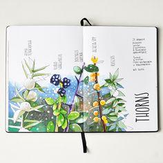 Botanical Art, Botanical Illustration, Watercolor Illustration, Watercolor Sketchbook, Artist Sketchbook, Copic Drawings, Copic Art, Artist Journal, Nature Journal