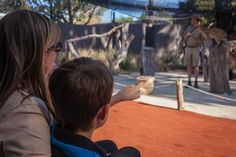 Did you know...When hunting, the Serval will often pluck birds from mid-air. The agile cat will jump high in the air (up to 3 metres) and thump its paws down on the bird!  See the Servals in action at Werribee Open Range Zoo: http://www.zoo.org.au/werribee/plan-your-visit/highlights/serval-cat-presentation