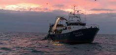 O Palhetas na Foz: Navio ficou sem propulsão a 7 milhas do porto da F...