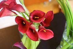 red calla lillies