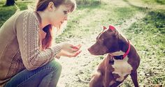 How to care For your Pit Bull  What kind of health problem do pit bull have?