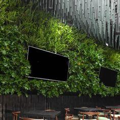 La importancia de convivir con lo verde se define con este jardín vertical en el restaurante La Popular en la CDMX. Si quieres ver cómo lo montamos en 2 días, ve el video del enlace, Flat Screen, Popular, Plants, Vertical Gardens, Gutter Garden, Woods, Restaurants, Nature, Most Popular