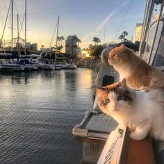 from ~ double tap Shop for Cat Lovers Funny Cat Videos, Funny Cats, Cool Cats, Animals And Pets, Cute Animals, Photo Chat, Beautiful Cats, Belle Photo, Crazy Cats