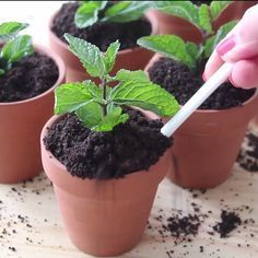 This potted plant packs a surprise treat. – Alejandro Galván This potted plant packs a surprise treat. This potted plant packs a surprise treat. Just Desserts, Delicious Desserts, Dessert Recipes, Yummy Food, Dessert Ideas, Healthy Food, Yummy Treats, Sweet Treats, Snacks Für Party