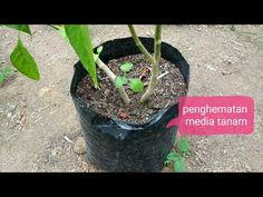 Plants, House, Home, Plant, Homes, Planets, Houses