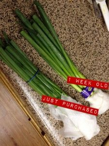 How to store green onions - Onion Storage, Food Storage, Storage Hacks, Storage Ideas, Storing Fruit, Vegetable Storage, Cooking Tips, Food Tips, Frozen Meals