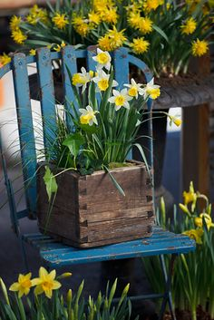 Early Spring Flowers for the Container Garden Early Spring Flowers, Chair Planter, Welcome Spring, Spring Has Sprung, Plantar, Garden Chairs, Daffodils, Garden Inspiration, Garden Art