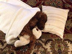 Lekker warm onder een dekentje en met knuffel.
