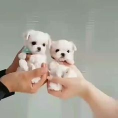 They are cute 😍♥ #dog #cute #doglove #puppy #family #friends #buyfordog Cute Funny Puppy Videos, Funny Dogs, Cute Animal Videos, Cute Baby Animals, Funy Animals, Cute Baby Puppies, Animals And Pets, Dogs And Puppies, Baby Dogs