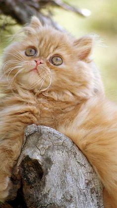 animal imagem - imagens do gato, papéis de parede de árvore, peludo vector, encontrando-se fundos fundo 750x1334 iPhone6 papéis de parede