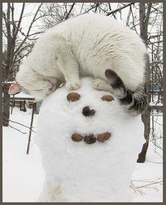 雪だるまにネコ