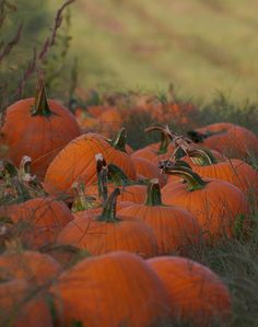 Isn't this pumpkin patch photo stunning? Photo credit goes to http://www.flickr.com/photos/debthepicturelady/