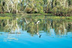 Kakadu, Yellow water billabong
