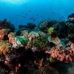 Scuba Diving, Diving